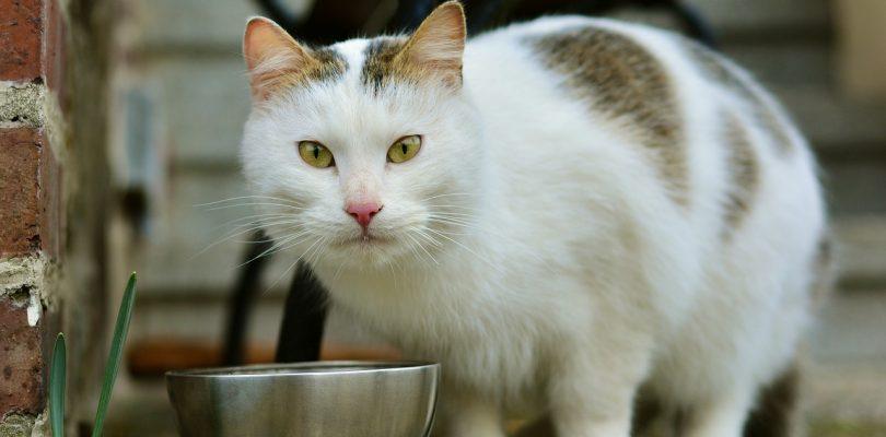 Katze Barfen: Die artgerechteste Fütterung für unsere Vierbeiner